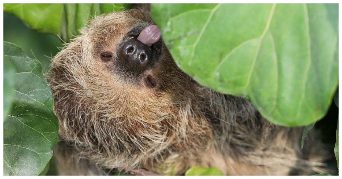 sloth.jpg?resize=1200,630 - Ce selfie avec une paresse est une forme de maltraitance animale et une nouvelle recherche explique pourquoi