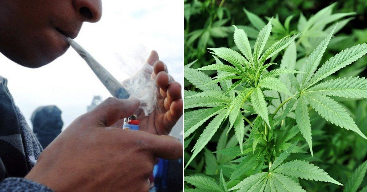 smoking4.jpg?resize=412,232 - Une étude indique que les effets de la marijuana persistent pendant 24 heures, altèrent la mémoire et l'apprentissage