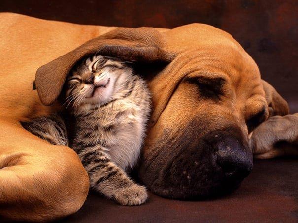 th 1.jpg?resize=1200,630 - 40 chats et chiens prouvant que vous n'avez pas besoin d'être de la même espèce pour être les meilleurs amis