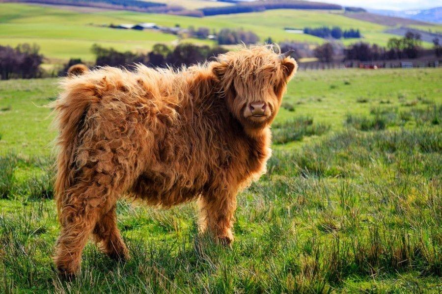 th 4.jpg?resize=1200,630 - 40 animaux étonnants qu'on a du mal à croire réels