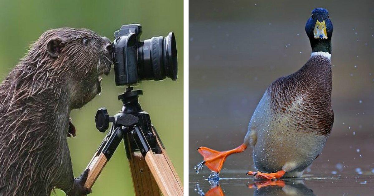 tirada.jpg?resize=412,275 - 22 Fotos de animais tiradas no melhor momento possível