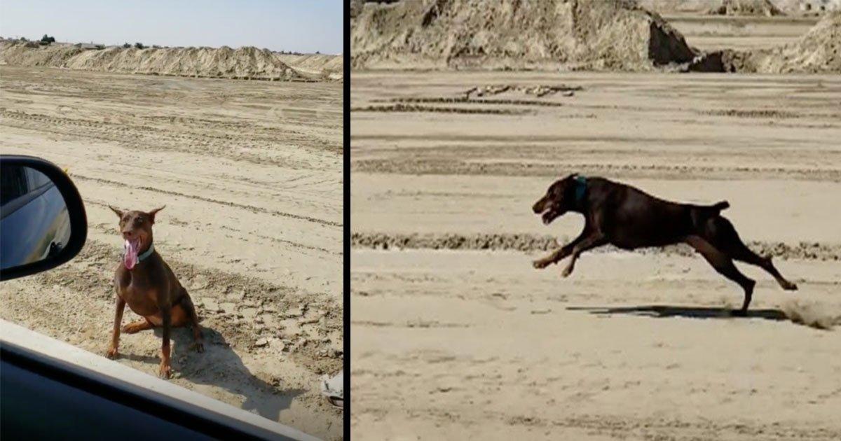 untitled 1 22.jpg?resize=412,232 - Une femme doit conduire sa voiture à 50km/h pour faire courir son chien