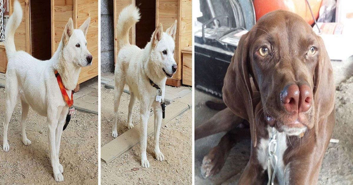 untitled 1 58.jpg?resize=412,232 - Rare Dog Breeds We've Never Heard Of Before