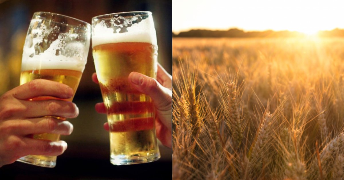 untitled design 2 3.png?resize=1200,630 - Prices Of Beer Will DOUBLE As Climate Change Hits Barley Yields
