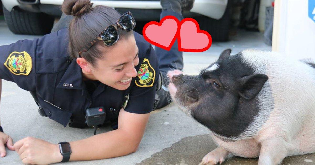 untitled design 20 1.png?resize=1200,630 - Un cochon égaré se lie d'amitié avec une policière après qu'ils aient répondu à l'appel d'un animal en liberté