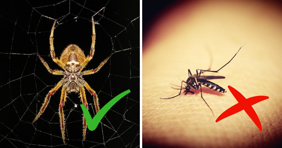 untitled design 40.png?resize=412,232 - Spiders Are Your Allies! Experts Reveal Why You Shouldn't Kill Spiders In Your Home