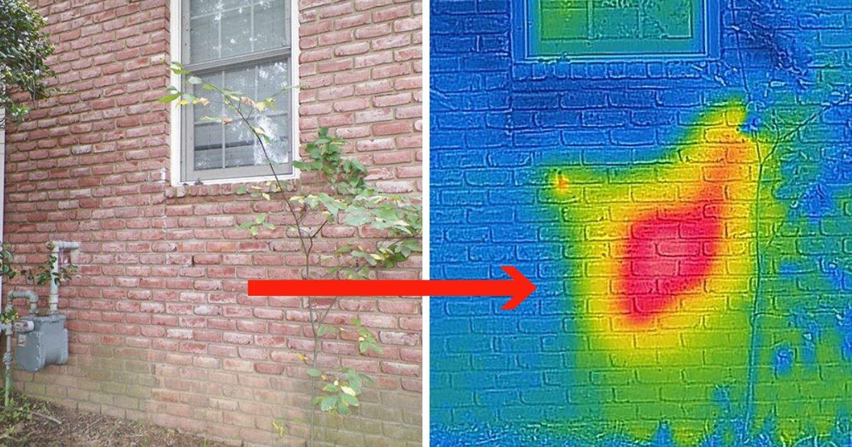 untitled design 77.png?resize=412,232 - Un nettoyeur d'abeilles fait une découverte choquante derrière le mur de briques du client
