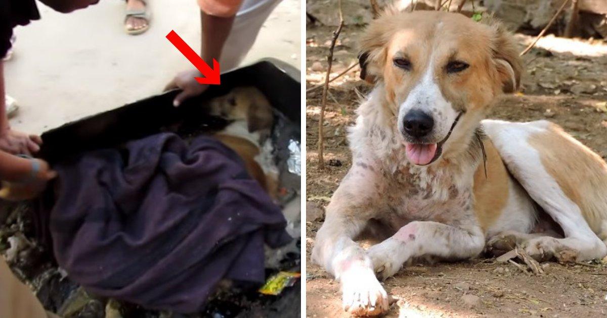 untitled design 78.png?resize=412,232 - Un chien bloqué dans du goudron en Inde a été sauvé