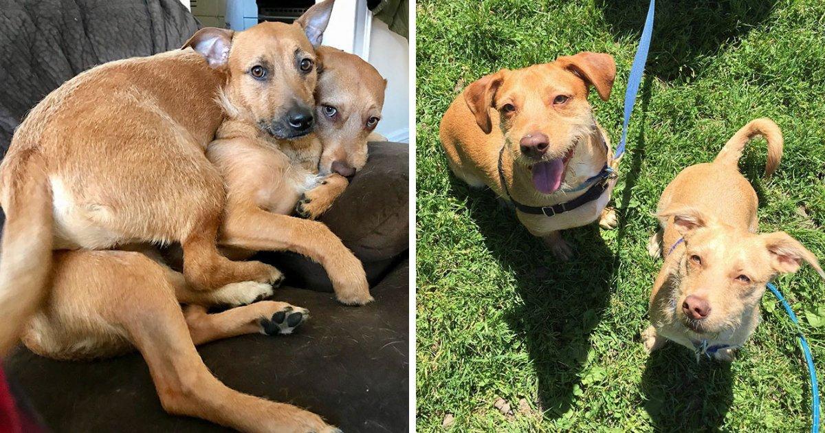 untitled design 85.png?resize=412,232 - Un chien rencontre son double et convainc les propriétaires de l'adopter!