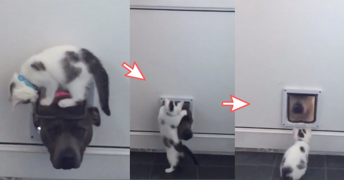 yogesh1 6.png?resize=412,232 - Adorable Cat And Its Playful Partner Were Recorded While They Were Indulged in a Fight