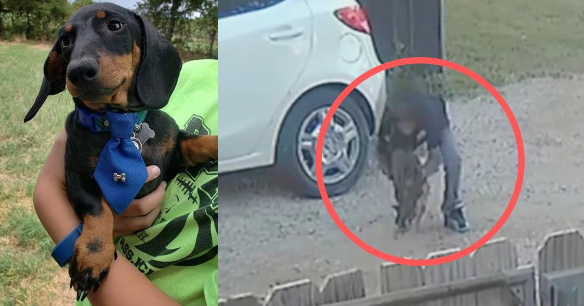 yogesh3 10.png?resize=1200,630 - Oklahoma Family's Puppy Repeatedly Beaten by a Child Brutally; Humanity Again Shamed