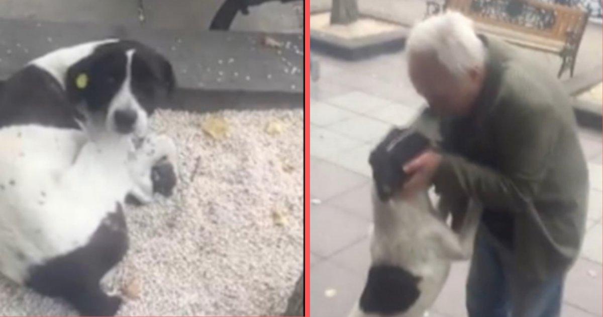 yogesh5 7.png?resize=1200,630 - Un homme retrouve son chien disparu après avoir passé 3 ans à sa recherche