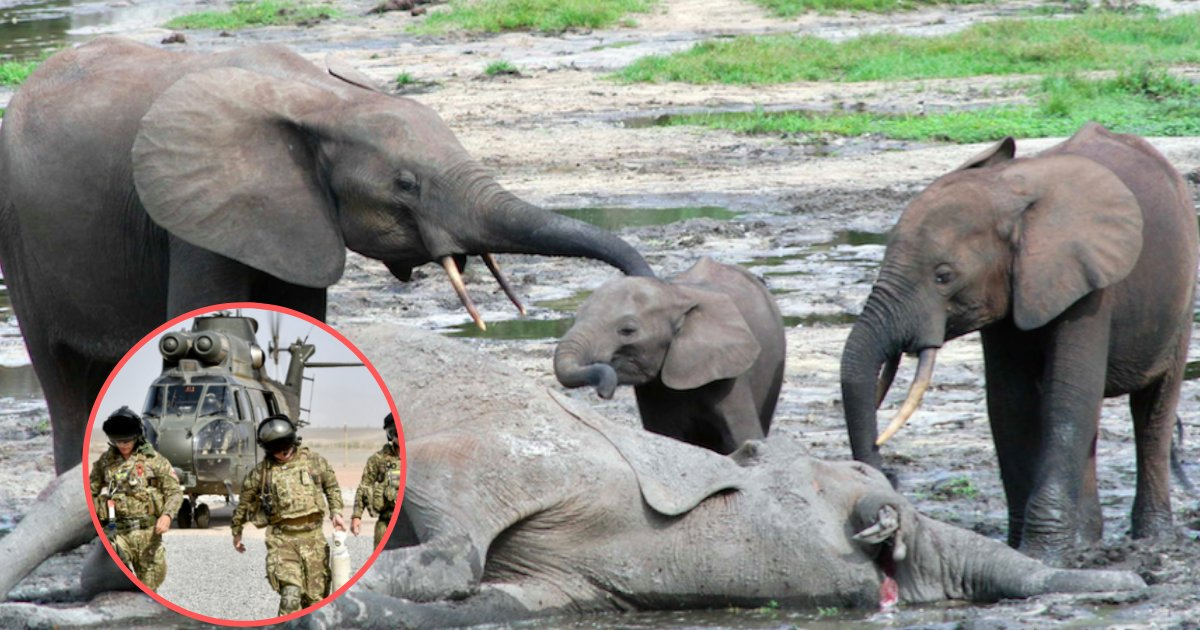 yogesh6 7.png?resize=412,232 - UK Takes Massive Step to Fight Against Poaching of Illegal Wildlife Animals