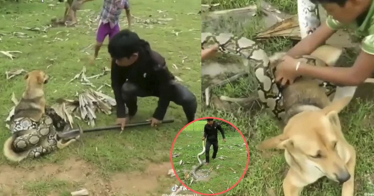 yogesh7 1.png?resize=636,358 - Three Boys Fight With A Monster Snake for Their Pet Dog Proving That Man is Also a Dog's Best Companion