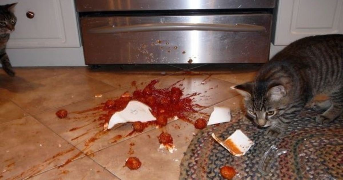 1 175.jpg?resize=1200,630 - 50 Hilarious Photos Of Pets Who Destroyed Your Stuff… #15 Is Just Too Funny.