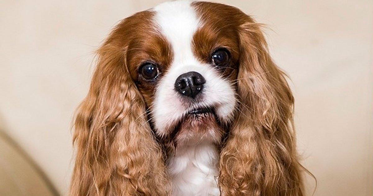 1 22.jpg?resize=1200,630 - 19 Perros que cuestan una fortuna