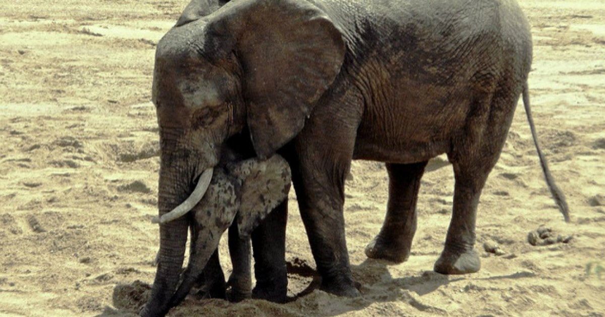 1 226.jpg?resize=1200,630 - 20 Animal Photos Proving There's Nothing Like a Mother's Love