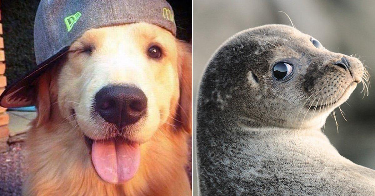 1 310.jpg?resize=1200,630 - 34 superbes animaux qui sont toujours prêts à poser pour les photographes.