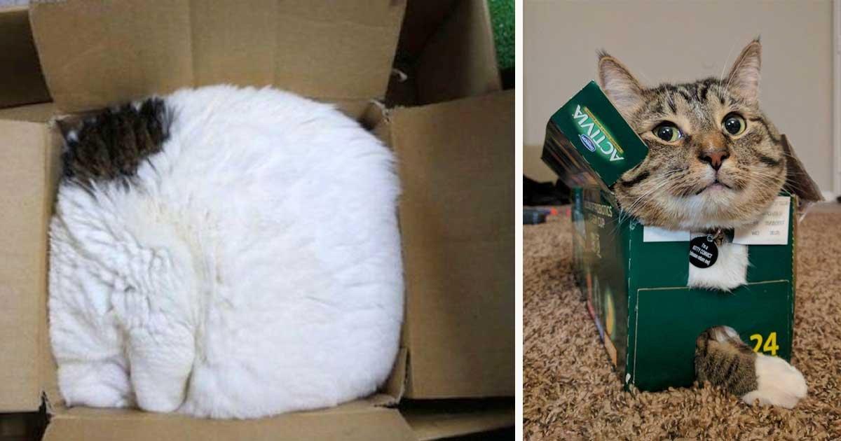 1 311.jpg?resize=1200,630 - 50 chats qui n'ont aucune idée de ce qu'est un lit