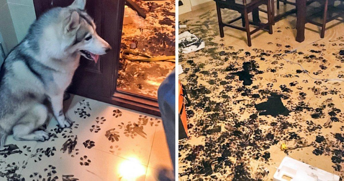 1 314.jpg?resize=1200,630 - Ces chiens ont été pris en flagrant délit de grosse bêtise!