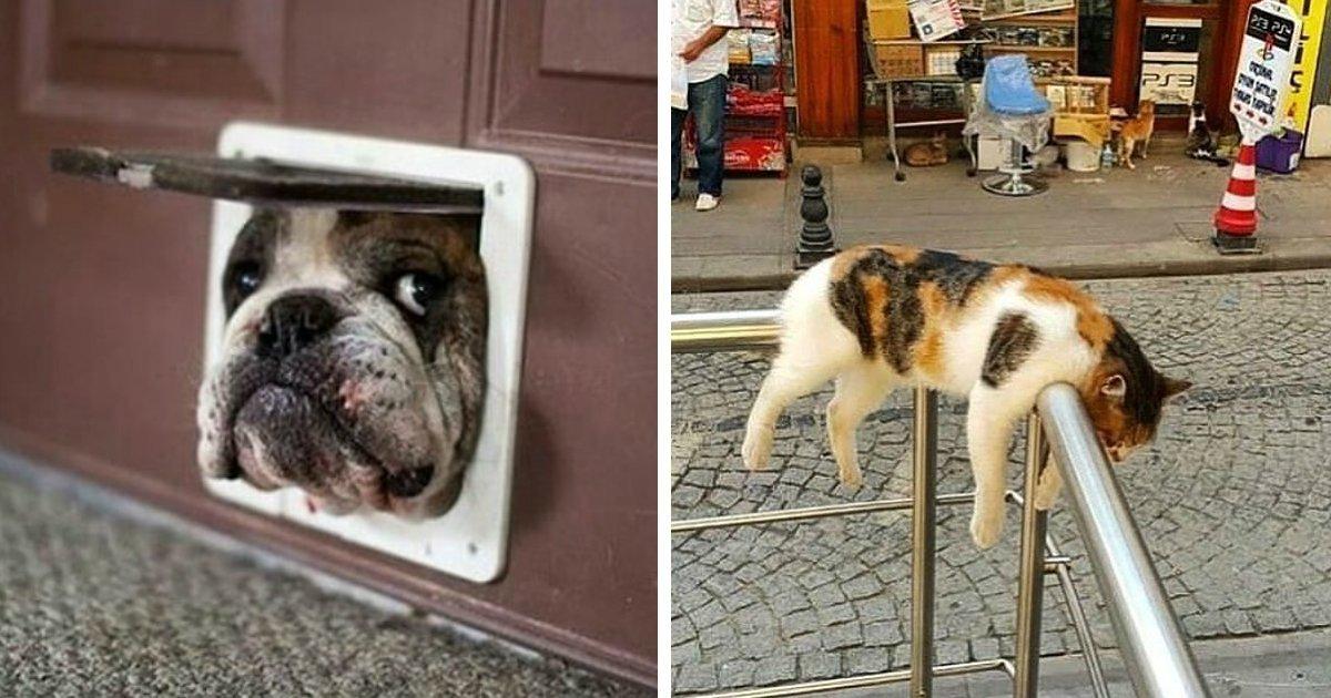 1 315.jpg?resize=412,232 - Des internautes partagent des photos de leurs animaux domestiques et leurs comportements étranges.