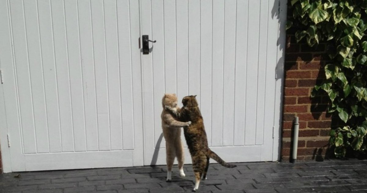 1 321.jpg?resize=1200,630 - 20 of the Most Unexplainable Cat Photos on the Internet