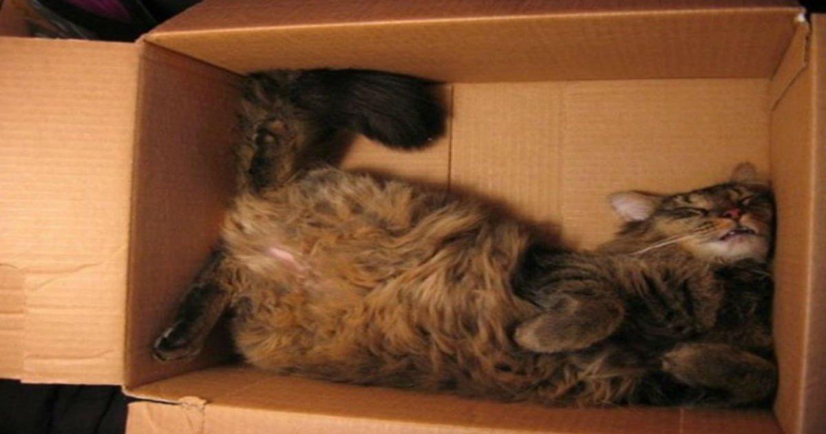 1 341.jpg?resize=412,275 - Ces 25 chats ont perfectionné l'art de la sieste