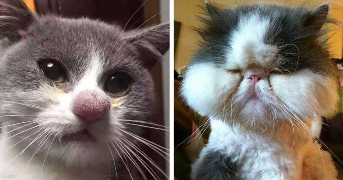 1 345.jpg?resize=412,275 - Ces chats ont été piqués par des abeilles - nous hésitons entre rire ou pleurer pour eux