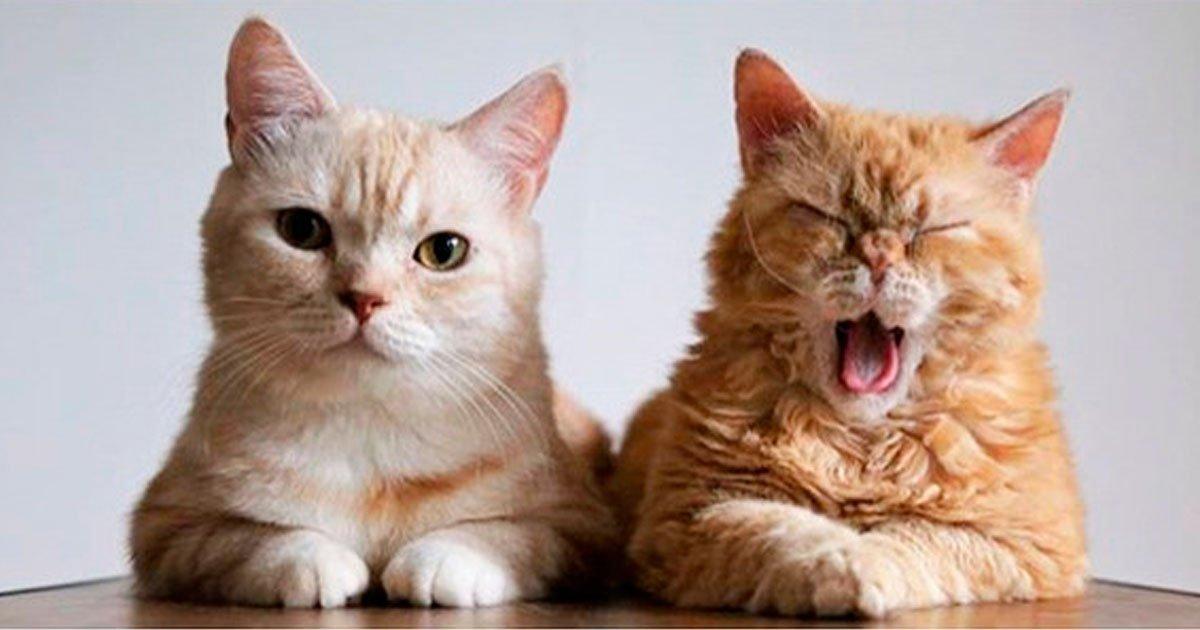 1 357.jpg?resize=1200,630 - 20 Gatos que aprovechan su minuto de fama al máximo