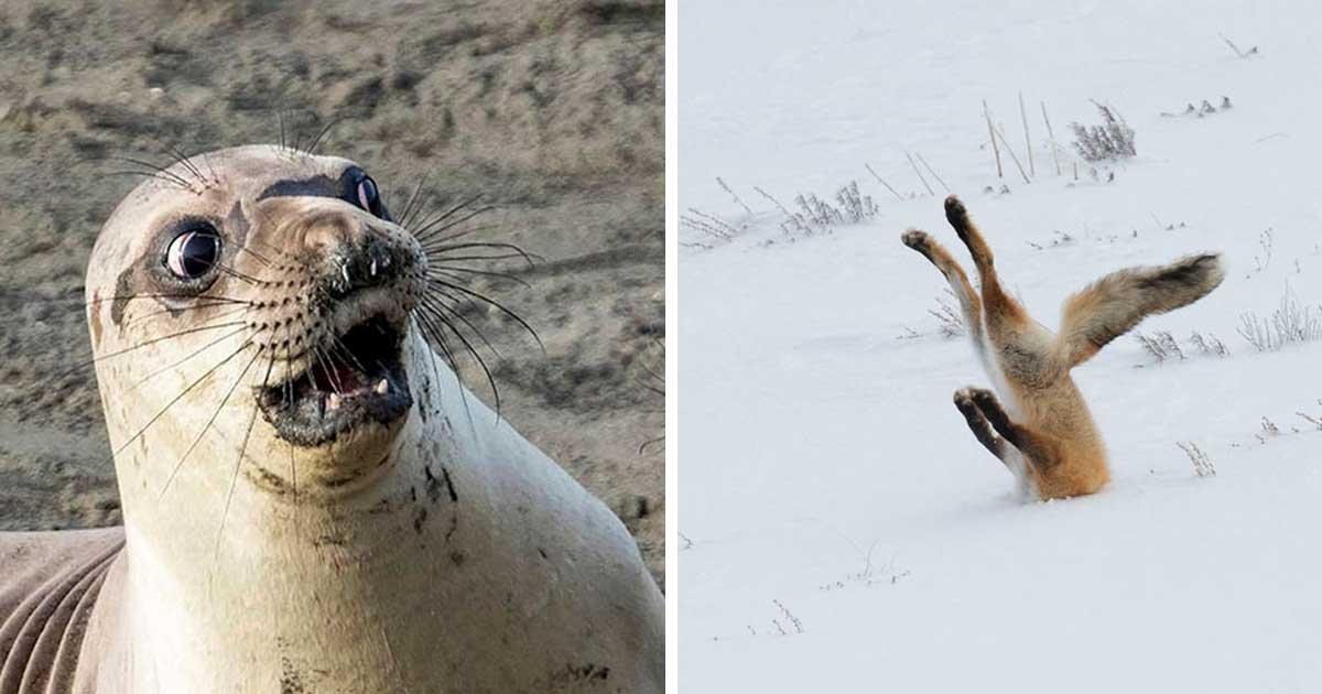 1 358.jpg?resize=1200,630 - 18 drôles de clichés soumis aux Comedy Wildlife Photography Awards