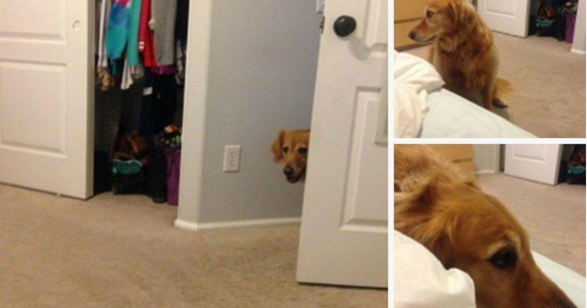 1 359.jpg?resize=1200,630 - 15 chiens incroyablement intelligents qui contournent les règles de leurs propriétaires
