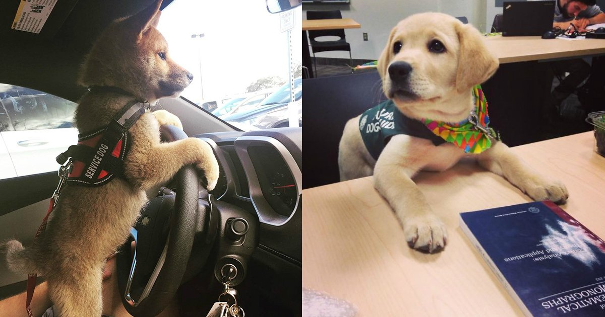 1 36.jpg?resize=1200,630 - 30+ Puppies On Their First Days Of Work That Will Make Your Day
