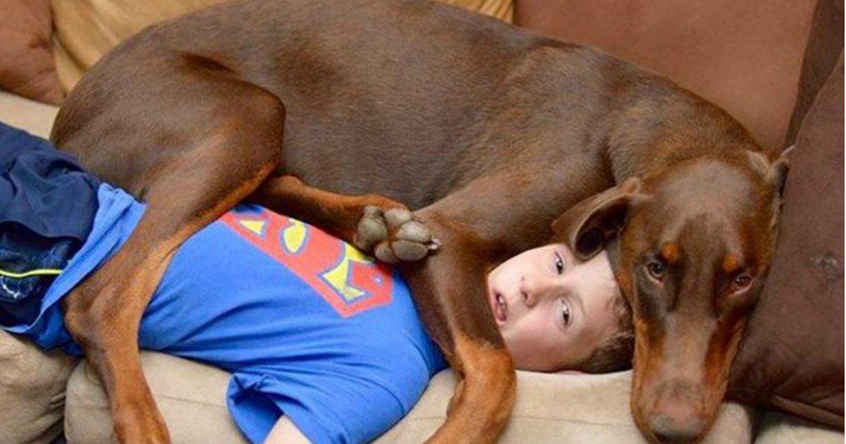 1 362.jpg?resize=1200,630 - 25 chiens adorables qui ne connaissent pas l'espace personnel