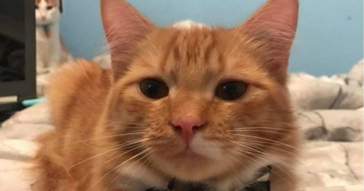 1 365.jpg?resize=412,275 - 21 raisons pour lesquelles les chats roux tigrés sont les meilleurs