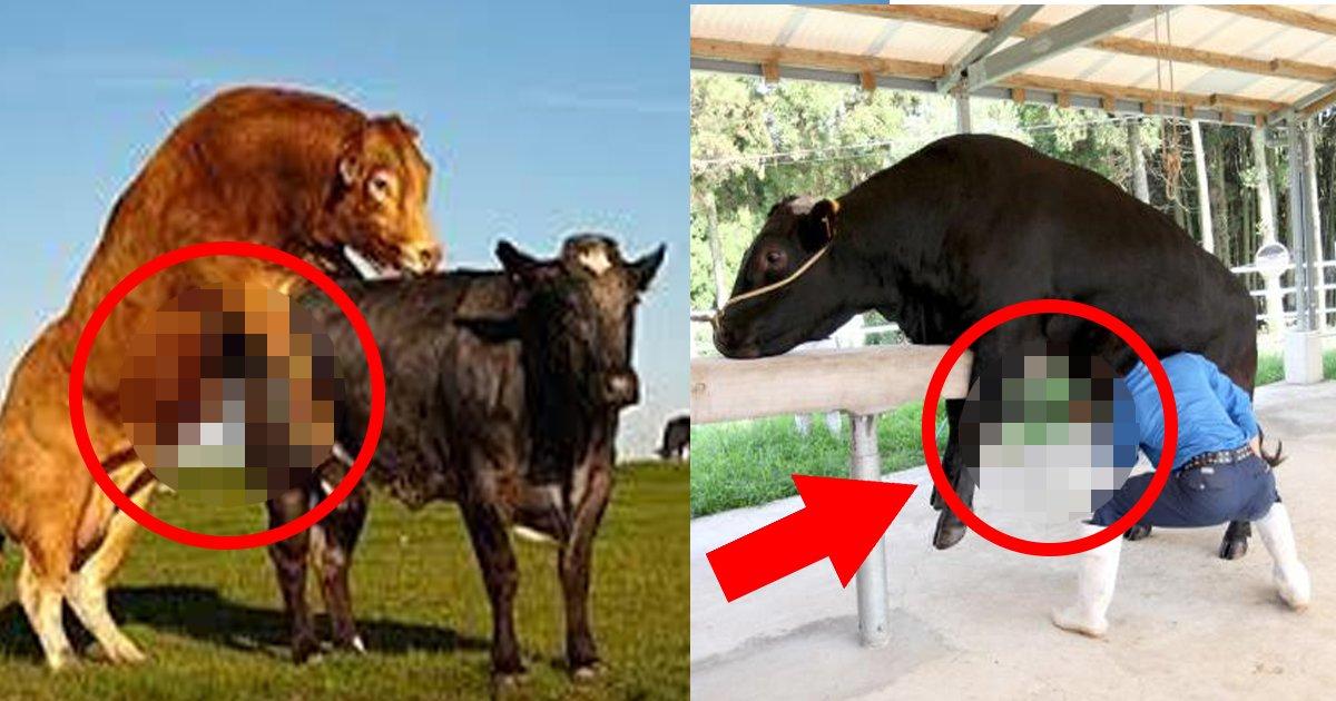 1 385.jpg?resize=300,169 - 海外から和牛の「あれ」を狙っている?!出国検査甘さに、貴重な資源流出は打撃!!