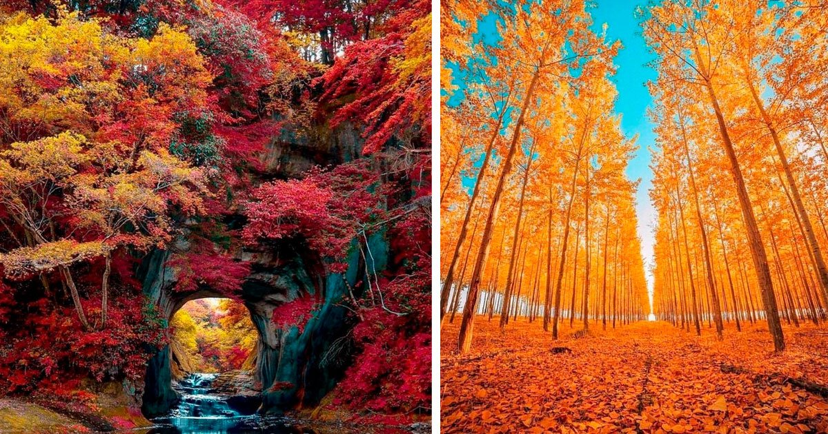 1 401.jpg?resize=1200,630 - 20+ Pruebas de que el otoño es el artista más hábil del mundo