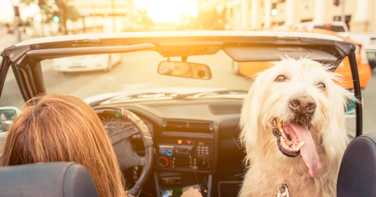 1 418.jpg?resize=1200,630 - 10 Cosas peligrosas que probablemente haces al conducir