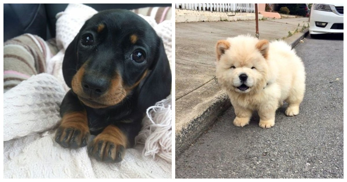1 473.jpg?resize=1200,630 - 24 Impossibly Adorable Puppies That Will Make Everything Ok Again
