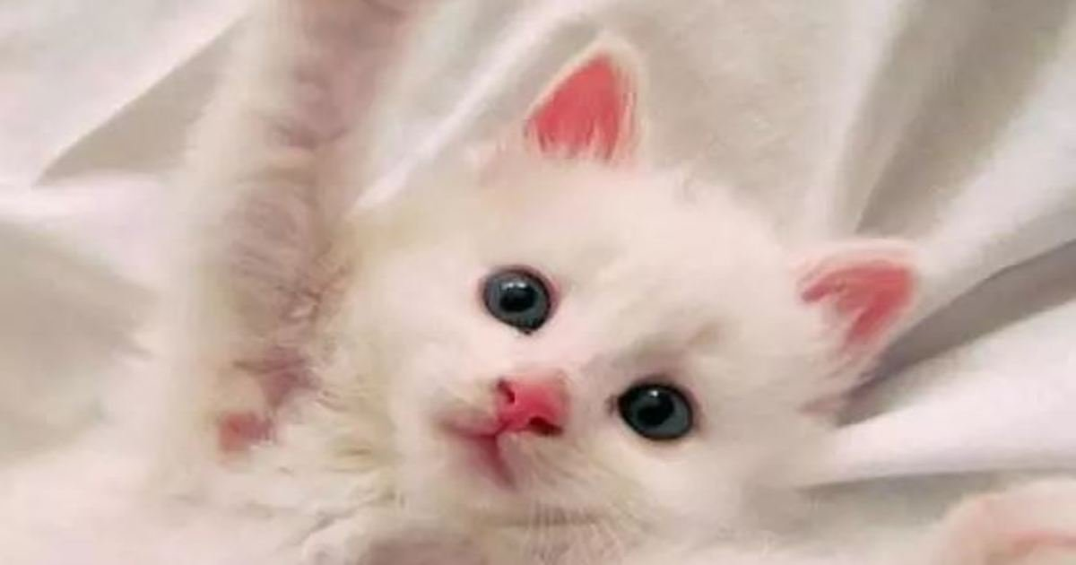 1 71.jpg?resize=1200,630 - 21 Adorable Cats Who Just Want A Hug