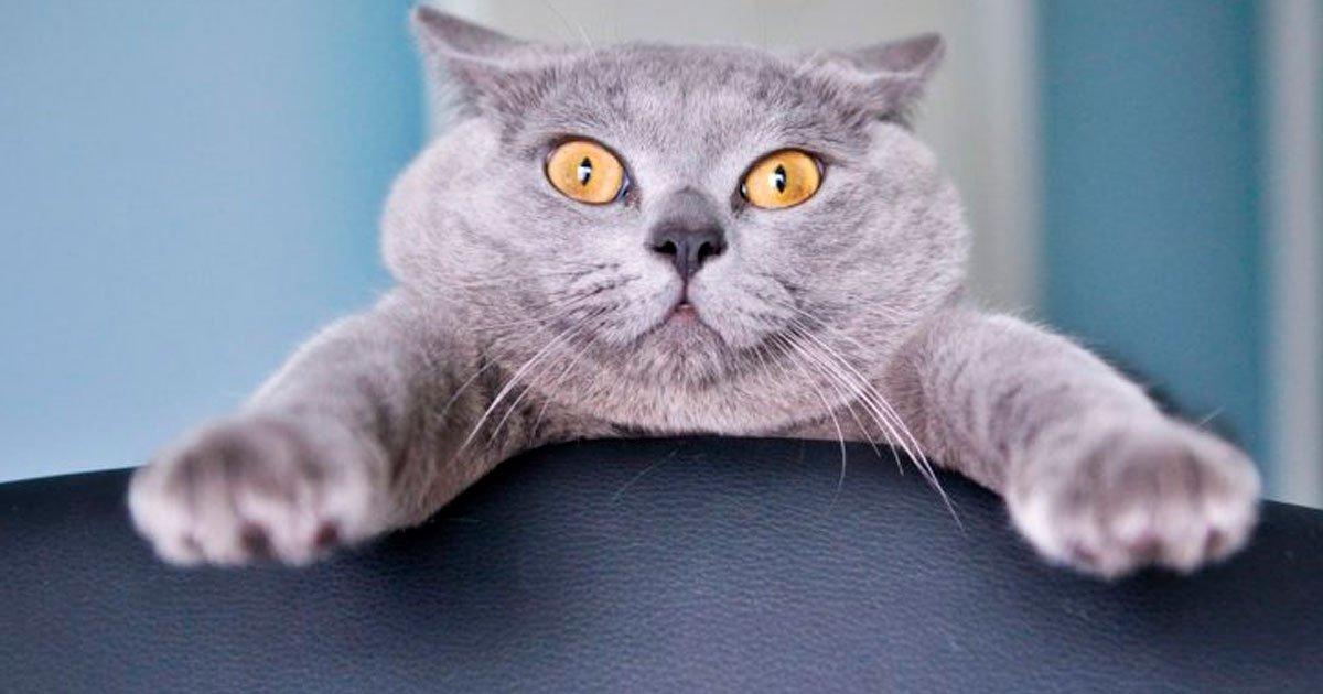 1 95.jpg?resize=1200,630 - 20+ Animales cuya imprevisibilidad los sorprendió hasta a ellos mismos