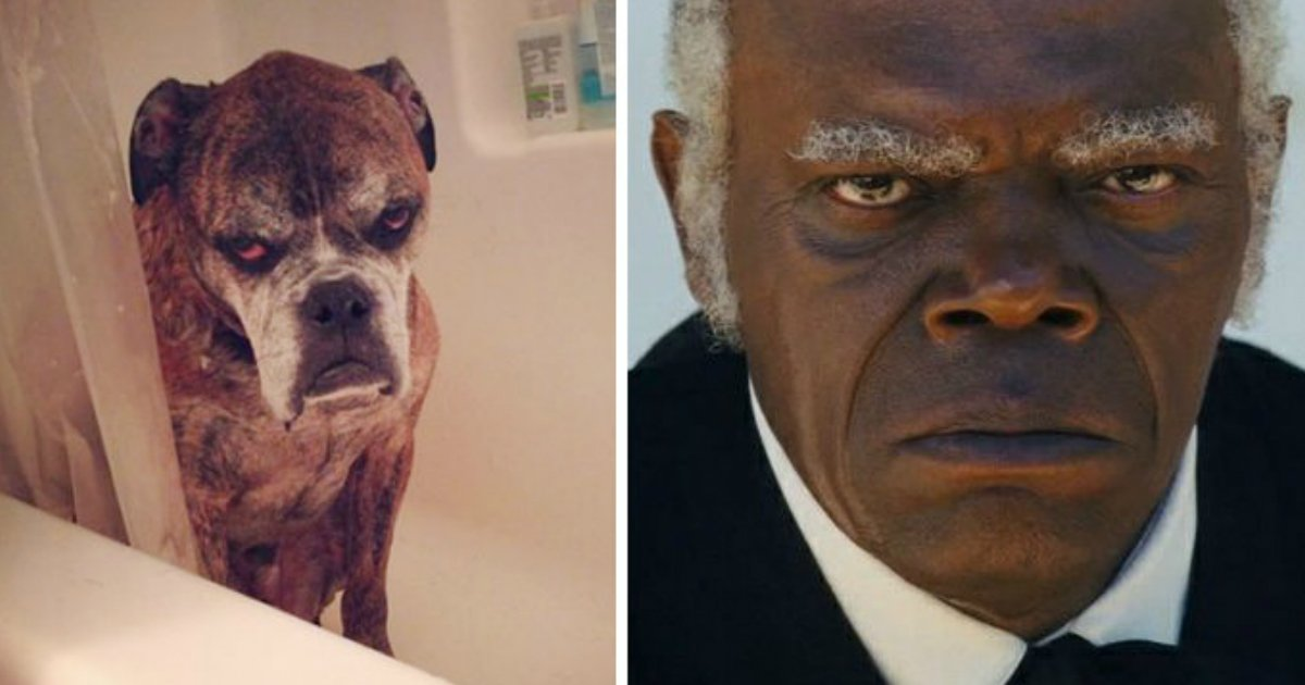 10 107.jpg?resize=1200,630 - 35+ Animals That Exactly Look Like Celebrities And Famous People