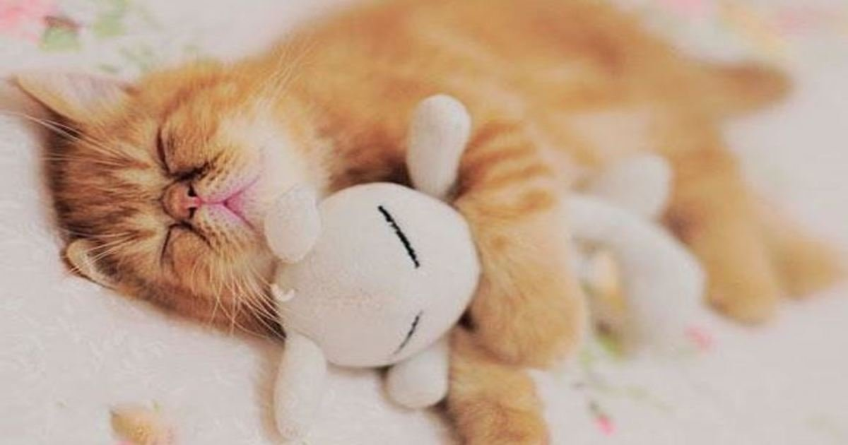 10 66.jpg?resize=412,232 - 25+ Animals With Their Favorite Stuffed Animal. Cuteness Overload!