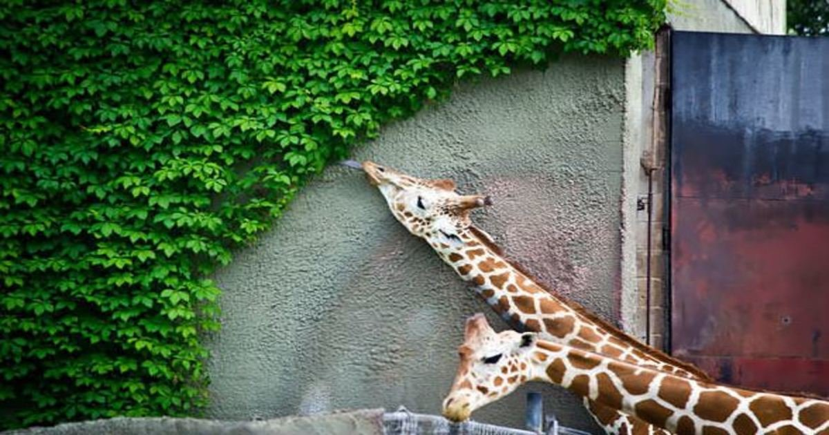 11 48.jpg?resize=1200,630 - 25 Adorable Animals Eating Food Like You Do On A Cheat Day.