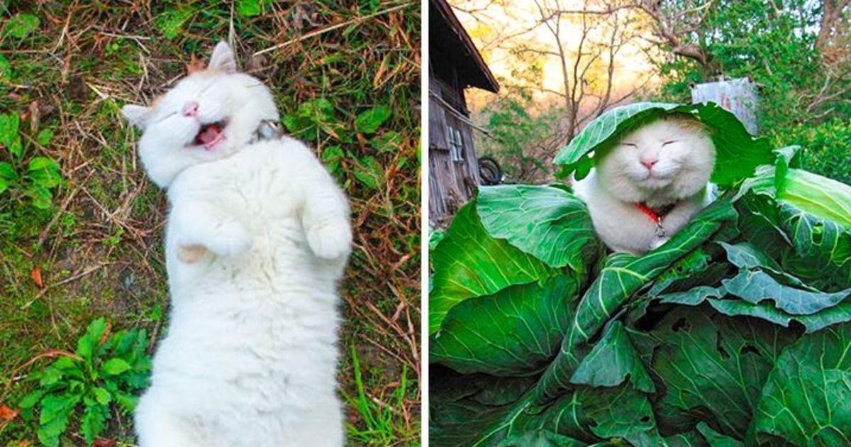 11 61 1.jpg?resize=412,232 - 21 chats et chiens qui peuvent élever le niveau de bonheur de votre journée