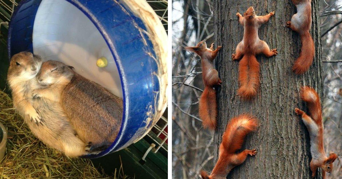 12 17.jpg?resize=412,232 - 25 photos d'animaux qui tirent fort sur vos cordes sensibles.