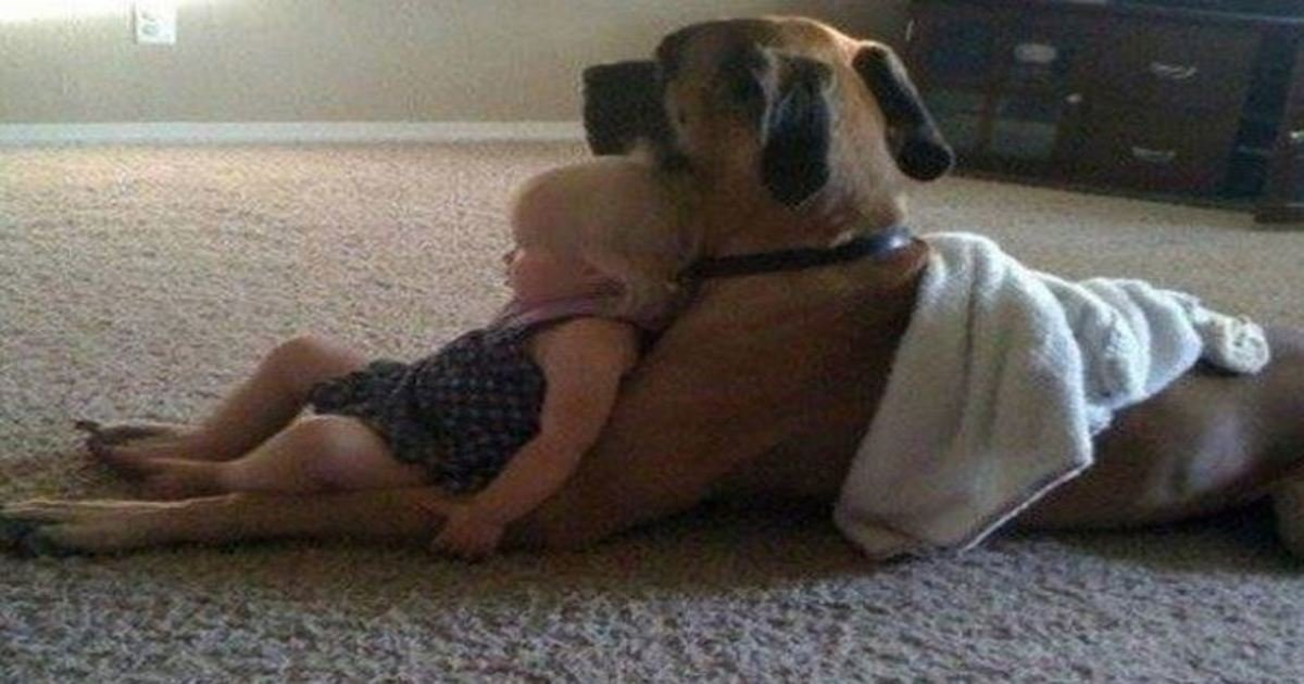 12 76.jpg?resize=636,358 - 25+ Moving Photos That Prove Dogs Are Too Precious for This World