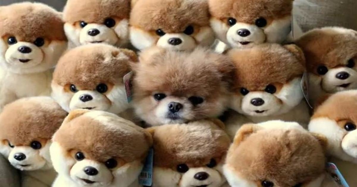 15 9.jpg?resize=1200,630 - 27 Pets That Have Mastered the Art of Camouflage