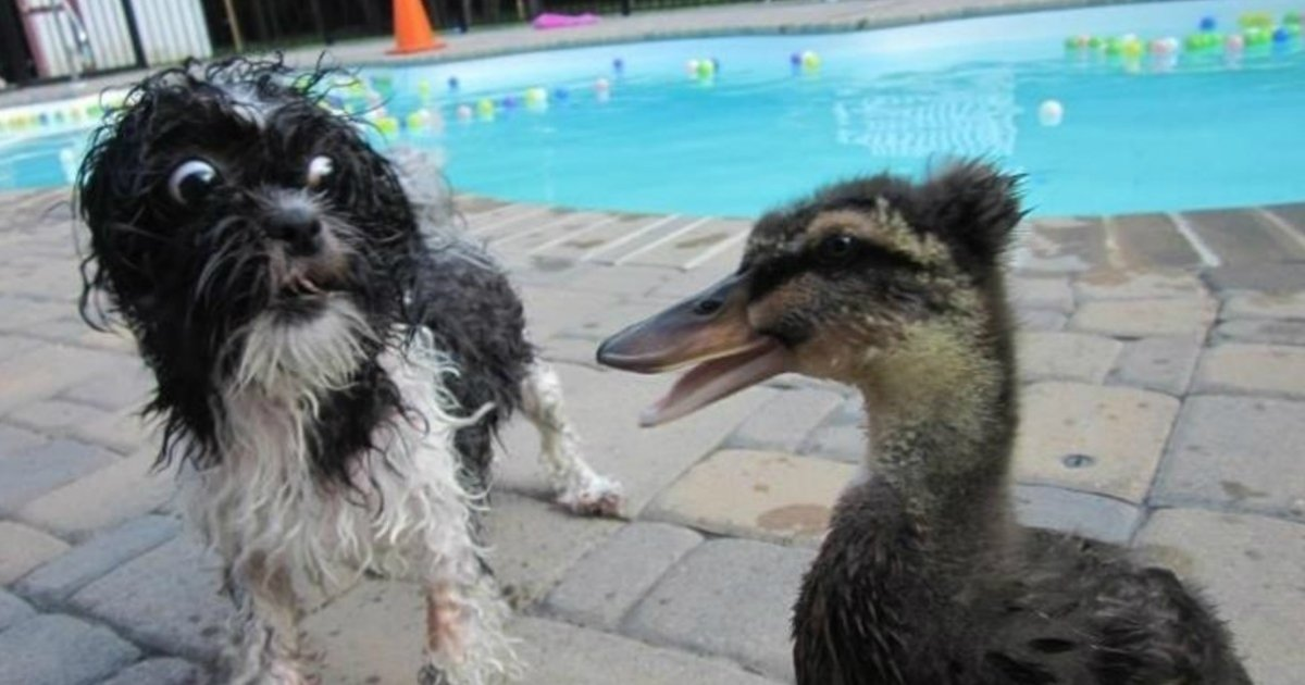 18 7.jpg?resize=412,232 - 35 Dogs That Are Completely Terrified of Totally Normal Things