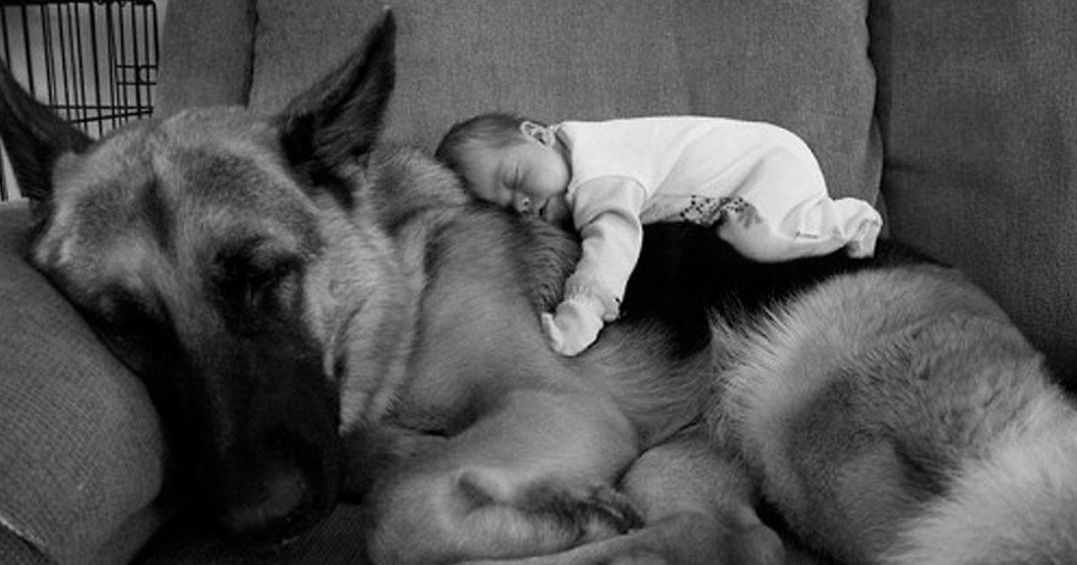 2 18.jpg?resize=1200,630 - 20 Pruebas de que cada bebé necesita una mascota