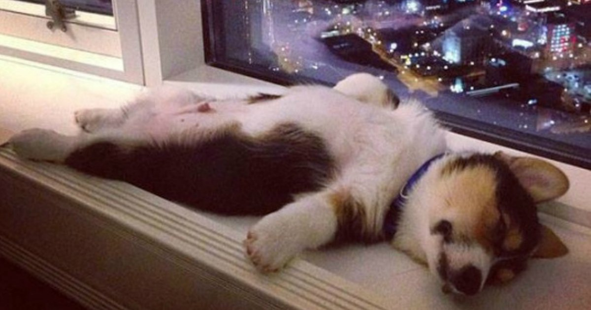 2 183.jpg?resize=1200,630 - 20 Animals That Sleep So Soundly We'd Like to Join Them